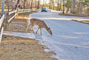 Michigan Urges Drivers to Watch for Deer During Hunting Season